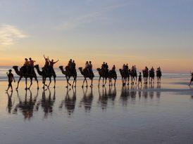 西澳Broome 沙灘騎駱駝
