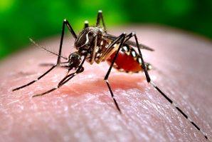 羅斯河病毒肆虐維州  逾千感染個案  做足防蚊措施